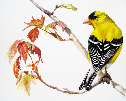 American Goldfinch watercolor portrait