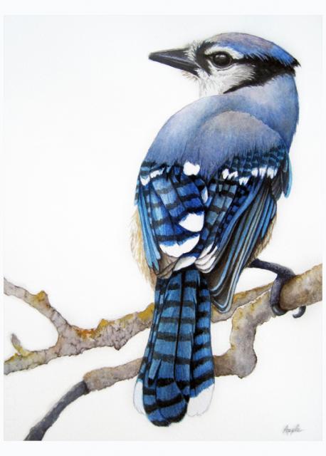 Blue Jay - bird portrait watercolor