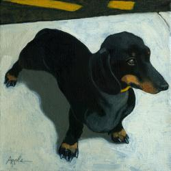 Dachshund on the Move - dog portrait