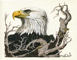 Eagle's View - animal realistic bird painting