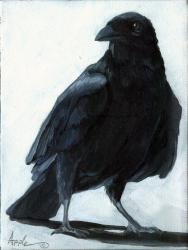 The Raven - animal art oil painting