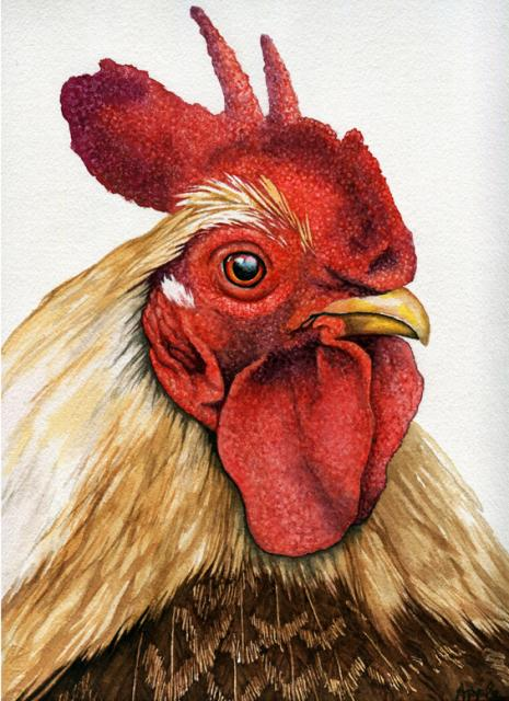 Rooster original watercolor nature farm animal realistic painting