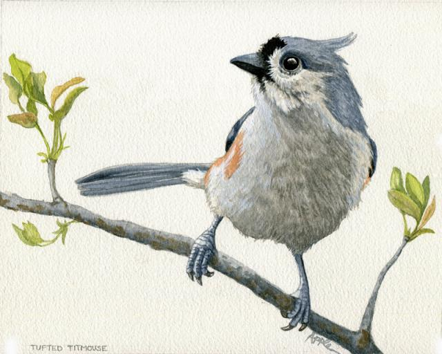 Tufted Titmouse Original Watercolor Painting, nature Bird portrait
