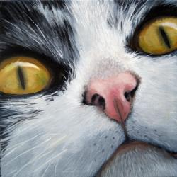 Cat Eyes animal cat portrait realism